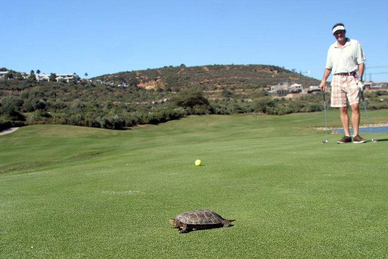 Finca Cortesin - Hole 3 terrapin