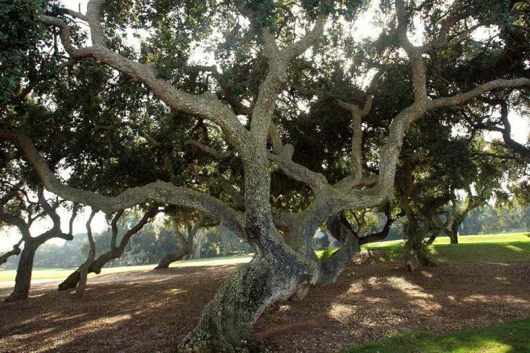 Sotogrande - Tree hazards